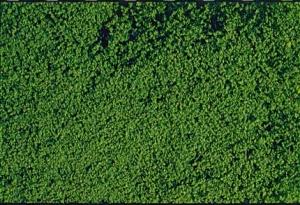 Heki 1602 Heki Mikroflor ciemnozielony 28x14 cm