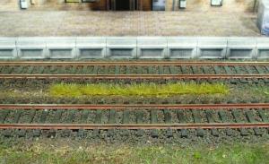 Paski trawy jesiennej 5-6 mm, 10 szt.