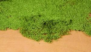 Listowie zielone 28x14 cm