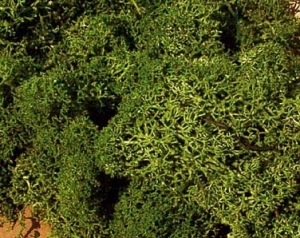 Heki 3234 Mech zielony 250 g