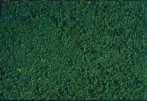 Heki Mikroflor zieleń sosny 28x14 cm