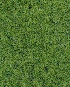 Heki 1871 Trawa runo leśne 40x24 cm, 2 szt.