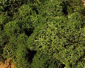 Heki 3222 Mech zielony 75 g