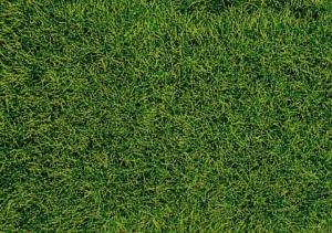 Heki 1573 Trawa siateczka ciemnozielona 28x14 cm
