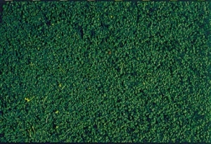 Heki 1603 Heki Mikroflor zieleń sosny 28x14 cm
